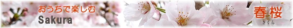 輪島塗 おうちで楽しむお花見・春桜